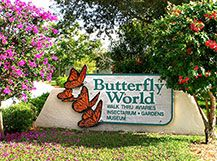Plant your butterfly garden in a sunny location (5-6 hours each day), but sheltered from the winds. Butterflies need the sun to warm themselves, place a few flat stones in your sunny location so the butterflies can take a break while warming up.  Butterflies need water Keep a mud puddle damp in a sunny location, or fill a bucket with moist sand. plants - those that provide nectar for the adults to eat (nectar plant), and those that provide food for their offspring (host plant)