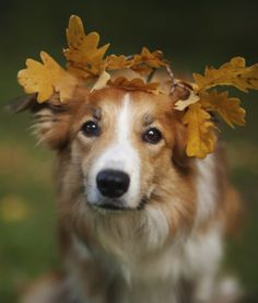 ohdearmee:  21 Pets That Are Falling Into Autumn | PawNation on We Heart It.