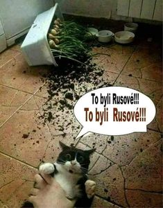Best pictures, videos and sayings and there are t … – … - Katzen Cat Memes, Funny Memes, Hilarious, Jokes, Animals And Pets, Funny Animals, Cute Animals, Image Facebook, Cool Pictures