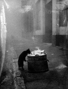 cat black in trash by sabine weiss