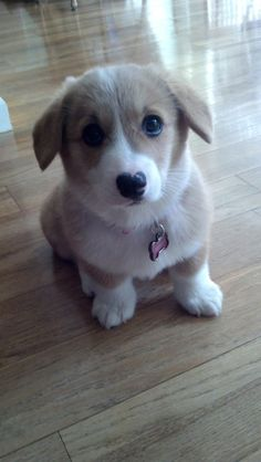 Look at those ears and the eyes...aww!