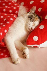 Minnie schläft noch... - Wohnen und Garten Foto