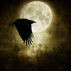 °The Raven by BrendaClarke ~Brenda-Starr~