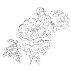 Illustration of Peonies ink background Vector illustration vector art, clipart and stock vectors. Peony Drawing, Peony Painting, Floral Drawing, Fabric Painting, Drawing Sketches, Sketching, Outline Drawings, Pencil Drawings, Art Drawings