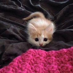 Sevimli yavru kediler