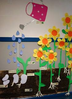 Creative Bulletin Board Ideas for Kids Plant Growth Board. A cool idea for spring science bulletin board in April. A cool idea for spring science bulletin board in April. Creative Bulletin Boards, Science Bulletin Boards, Preschool Bulletin, April Bulletin Board Ideas, Sunflower Bulletin Board, Spring Activities, Preschool Activities, Kids Crafts, Planting For Kids