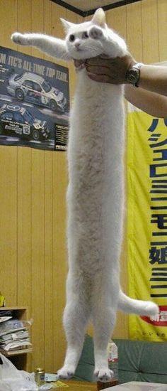 Pluslong chat du monde