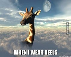 over the clouds, Fantasy Art, Digital Art. giraffe by debra, rendered in Tall Girl Problems, Tall People Problems, Women Problems, Polo Norte, Foto Fun, Giraffe Art, Giraffe Quotes, Giraffe Decor, Funny Giraffe