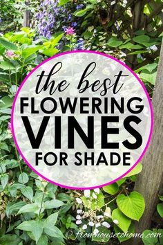GREAT list of perennial flowering vines that thrive in the shade. When I needed to hide my neighbor's shed from view in my shady garden, I had a tough time finding vines that were non-invasive and looked good. This list of perennial shade vines has some really pretty plants that won't take over your yard. #shadevines #floweringvinesforshade #perennialvines