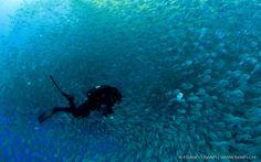 Ponza Diving | Isola di Ponza | Vacanze Ponza | Isola di Ponza diving | Fare immersioni a Ponza | Turismo Ponza | Scuola sub Ponza | Offerte...