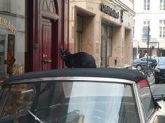black cat in Paris