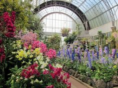 Auckland winter gardens - inside