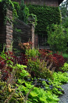 Border full of heat loving Sun Coleus, Lantana, Margarita and Blackie Sweet Potato Vine and Magilla Perilla.