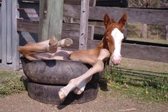 That looks like what my horse did in a creek when I was on her!!! ....... That stupid horse