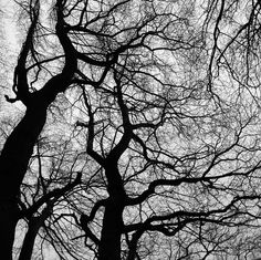 by Manuel Souillac / trees