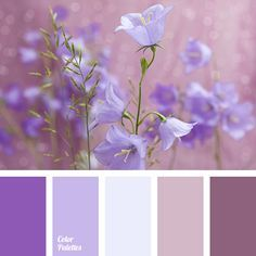 bright pink color, bright purple color, cornflower color, dark purple color, dark violet color, gray-violet shades, lilac color, pale blue color, pale lilac color, pale-violet color, ple pink color.