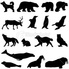 arctic animals for DIY placemats