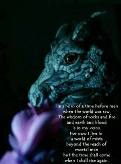 Are you a dragon lover? If you are, you will love this collection of quotes about dragons that will make you fantasize about these fearsome creatures. Read and share it with other dragon lovers. Magical Creatures, Fantasy Creatures, Dragons 3, Mythical Dragons, Dragon Oriental, Dragon Quotes, Dragon Poems, Dragon Energy, Dragon Dreaming
