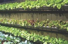 Gutters attached to fencing for a vertical garden. Love this idea!