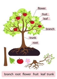 Parts of Tree.Clipart.Tree structure trunk, root, branch, fruit, leaf, root from Alefclipart on TeachersNotebook.com -  (18 pages)  - Parts of Tree.Clipart.Tree structure trunk, root, branch, fruit, leaf, root