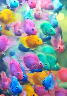 STRANGE SCHOOL OF COLORFUL TROPICAL FISH - GREAT PASTEL COLORS!