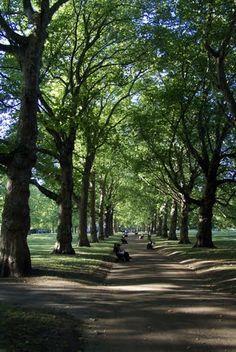 Green Park in summer