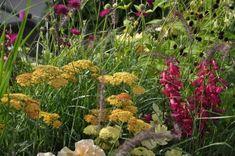 Gul, Plants, Plant, Planets