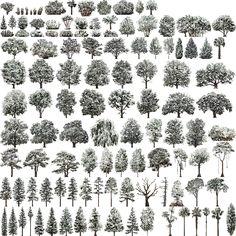 USA_trees_East_winterA.jpg (1024×1024)