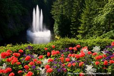 Ross Fountain at The Butchart Gardens, a National Historic Site of Canada, offering 22ha (55 acres) of stunning floral displays, Victoria, Vancouver Island, British Columbia, Canada