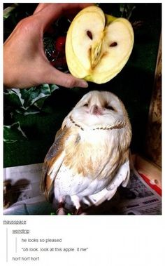 Apple Owl Photograph // Funny Exotic Fruits And Vegetables Photos Cute Funny Animals, Funny Animal Pictures, Funny Cute, Hilarious, Funny Pics, Random Pictures, Funny Stuff, Silly Pics, Owl Pictures