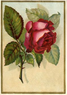 *The Graphics Fairy LLC*: Victorian Graphic - Beautiful Red Rose