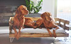 Un canapé lit pour chien avec une palette sur pieds