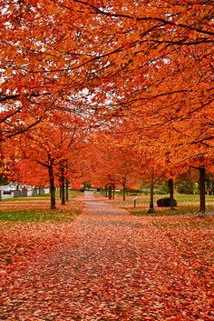 #Vancouver in the Fall