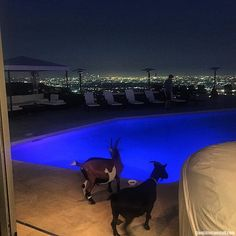 It's good to be back home with my Hollywood goats #Bilzerian16 | Dan Bilzerian Stuff - Girls, Guns and Supercars