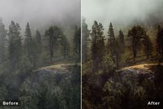 Forest Landscapes | Lightroom Presets Workflow
