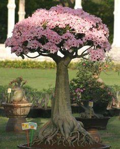 ♦☼I love this cute #bonsai tree!♣☺       #BonsaiInspiration