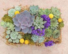 50% Off SALE Artificial Succulent Arrangement in a by Aloha4649