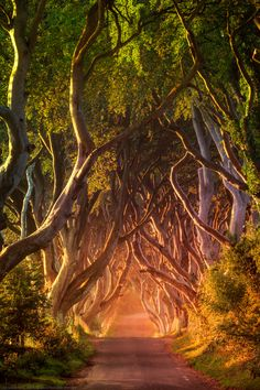 Sunrise at The Dark Hedges, Ballymoney, County Antrim, Northern by Joe Daniel Price on 500px  )
