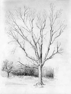 Color Pencil Drawing Tutorial how to draw trees. a very good step-by-step tutorial. Tree Drawings Pencil, Pencil Drawing Tutorials, Flower Drawings, Trees Drawing Tutorial, Landscape Steps, Landscape Drawings, Landscape Sketch, Landscapes, Realistic Drawings