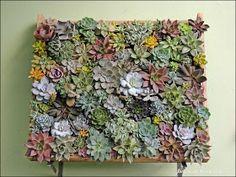 Jardim de Cactus&Suculentas by Josi Cardoso: Passo a Passo para fazer quadro de Suculentas