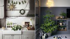 Här är julens 4 starkaste växttrender