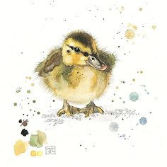 Mallard Duckling by Jane Crowther, Bug Art cute-fluffy-duckling repinned by bluejdesign.co.uk