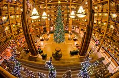 Disney's Wilderness Lodge Review - the BEST hotel to book for Christmas season at Walt Disney World!