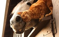 *barn cats really know who their friends are