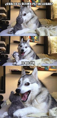 So punny. - Jokes - Funny memes - - So punny. I love memes with this dog! This dog is my spirit animal The post So punny. appeared first on Gag Dad. Cheesy Jokes, Corny Jokes, Funny Puns, Funny Shit, Funny Quotes, Funny Stuff, Hilarious Jokes, Puns Jokes, Stupid Jokes