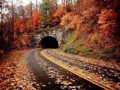 Outono... A mais linda estação