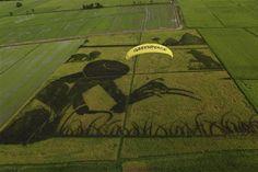 Organic Rice Art Ratchaburi.  Photographer: Greenpeace / Athit Perawongmetha