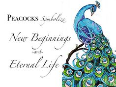 Tattoo Feather Meaning Life 43 Ideas Peacock Decor, Peacock Colors, Peacock Bird, Peacock Theme, Peacock Wedding, Peacock Feathers, Peacock Design, Peacock Bedroom, Peacock Feather Tattoo Meaning