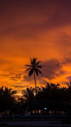 Palm trees sunset by Javardh [2160x3840]