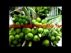 Rượu dừa Cố Đô